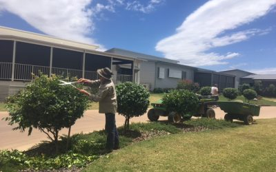Citrus Trees To Be Planted Just In Time For Christmas!